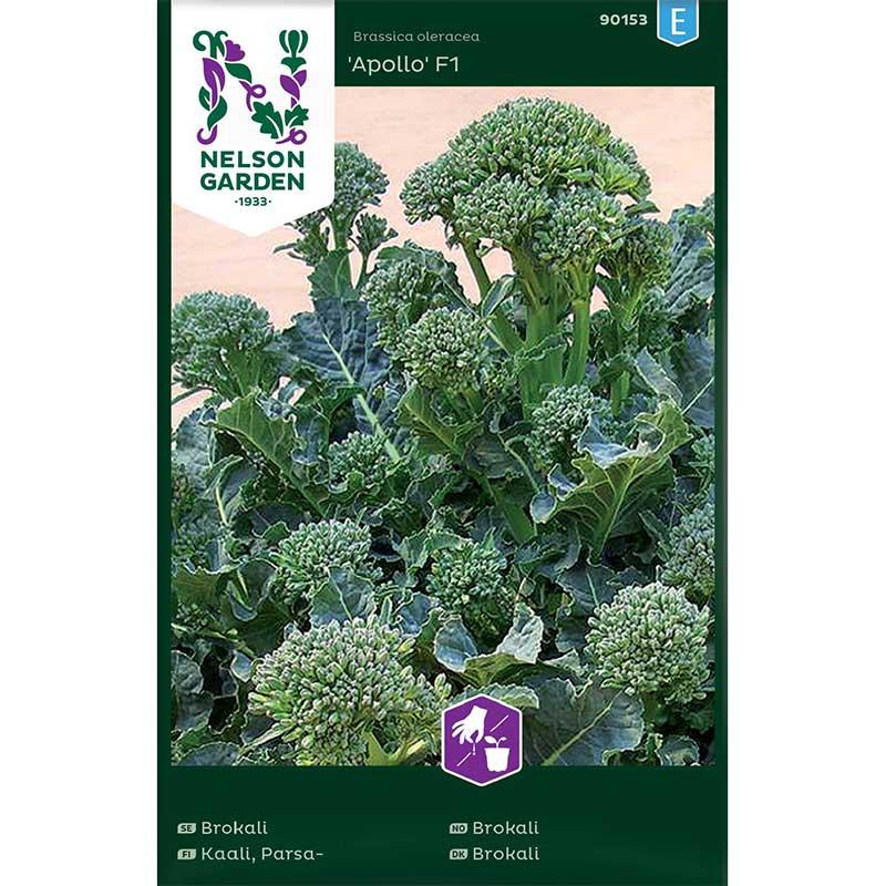 Frö till Broccoli 'Apollo' F1