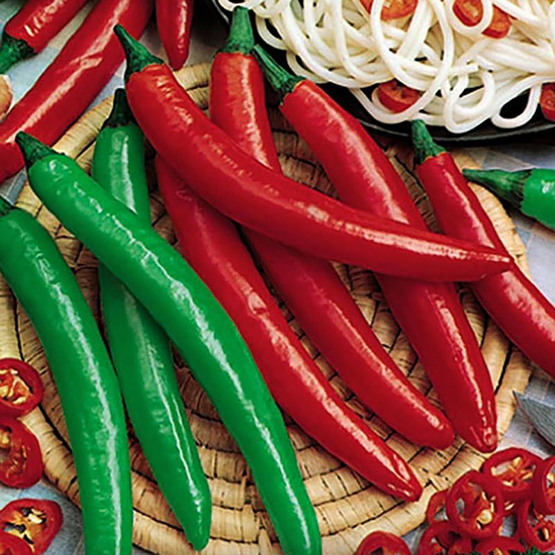 Chilifrö till Cayenne Long Slim