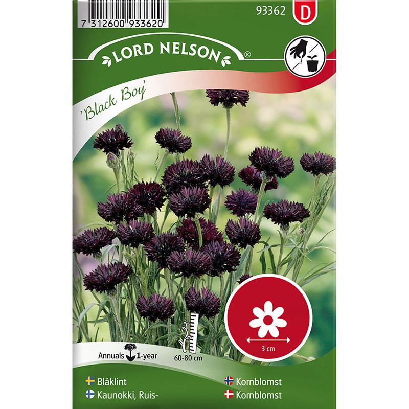 Frö till Blåklint, Centaurea cyanus 'Black Boy'