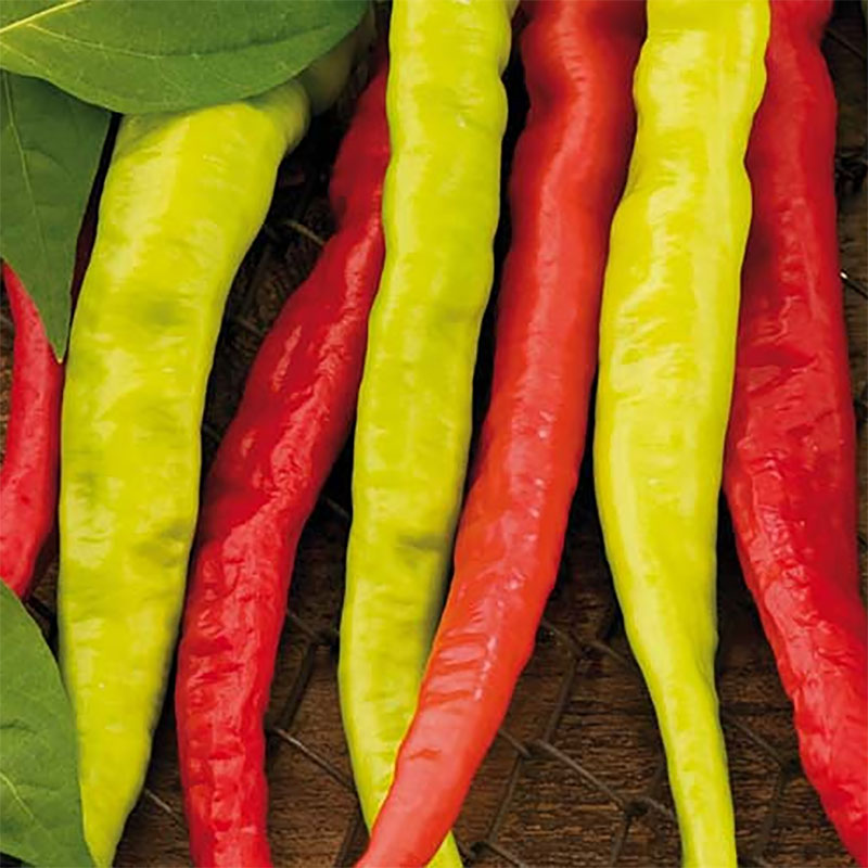 Frö till Chilifrukt Lombardo