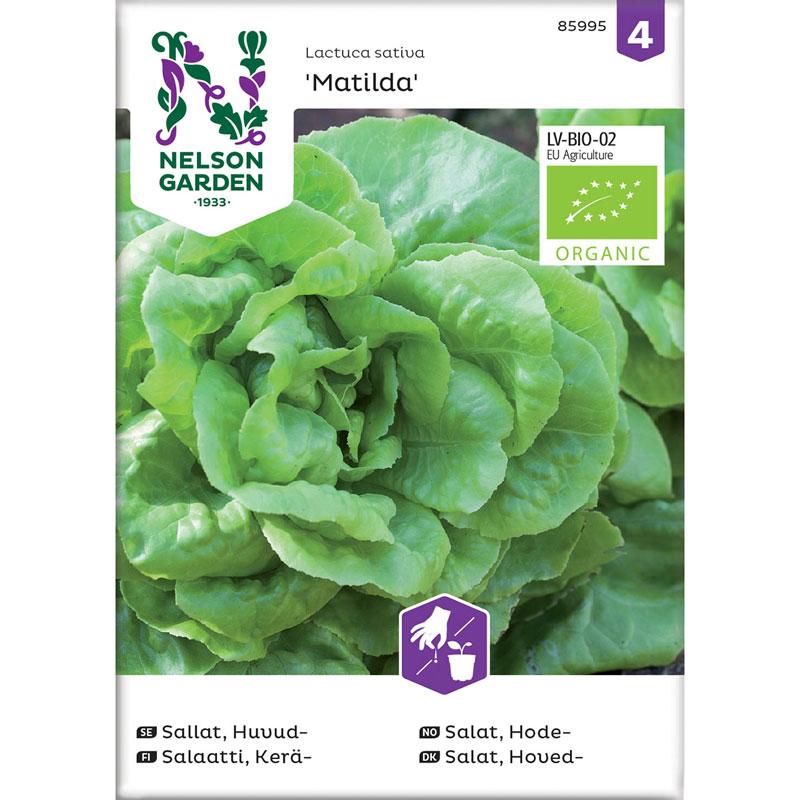 Frö till Huvudsallat Lactuca sativa 'Matilda', Organic, ekologiskt