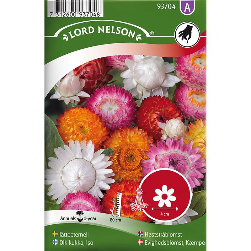 Frö till Jätteeternell, Xerochrysum bracteatum, mix