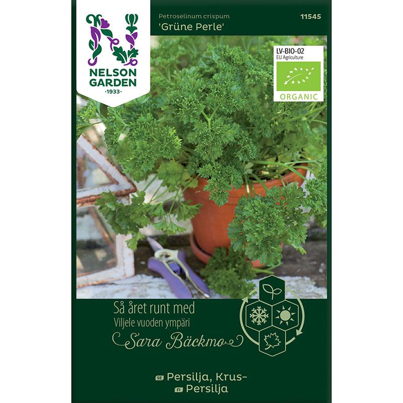 Frö till Kruspersilja, Petroselinum crispum 'Grüne Perle'