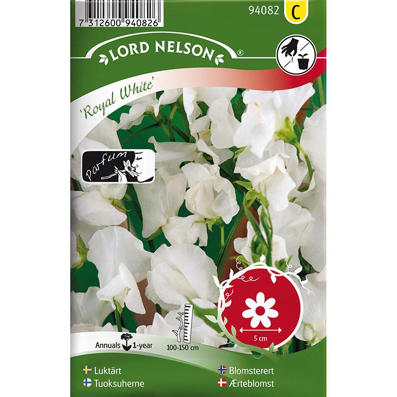 Frö till Luktärt, Lathyrus odoratus L. 'Royal White'