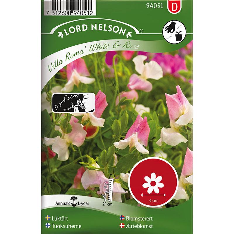 Frö till Luktärt, Lathyrus odoratus L. 'Villa Roma White & Rose'