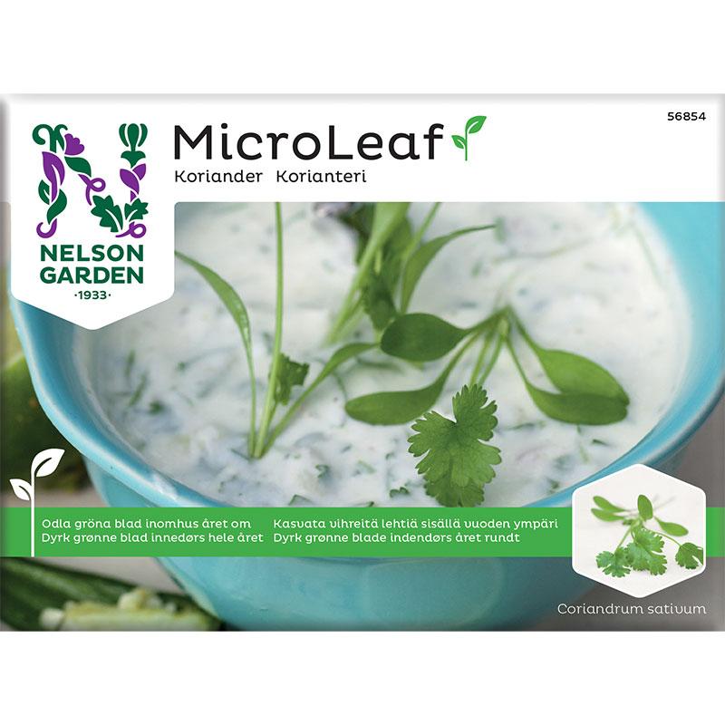 Frö till mikroblad, Micro Leaf, Koriander