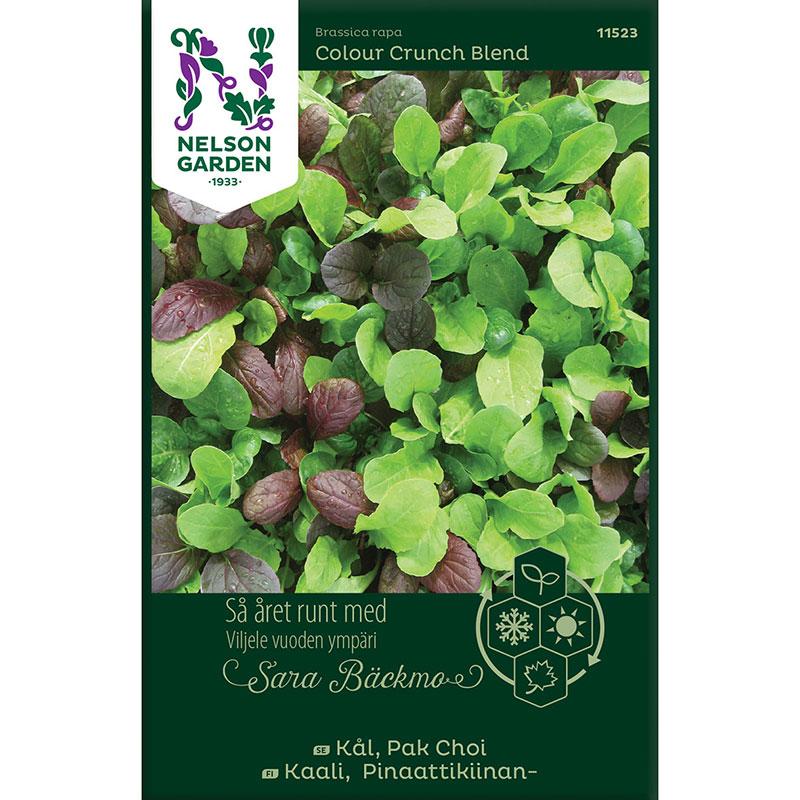 Frö till Pak Choi, Brassica rapa 'Colour Crunch Blend'