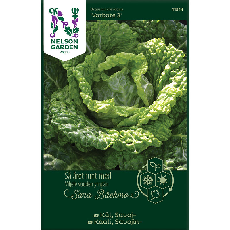 Frö till Savojkål, Brassica oleracea 'Vorbote 3'
