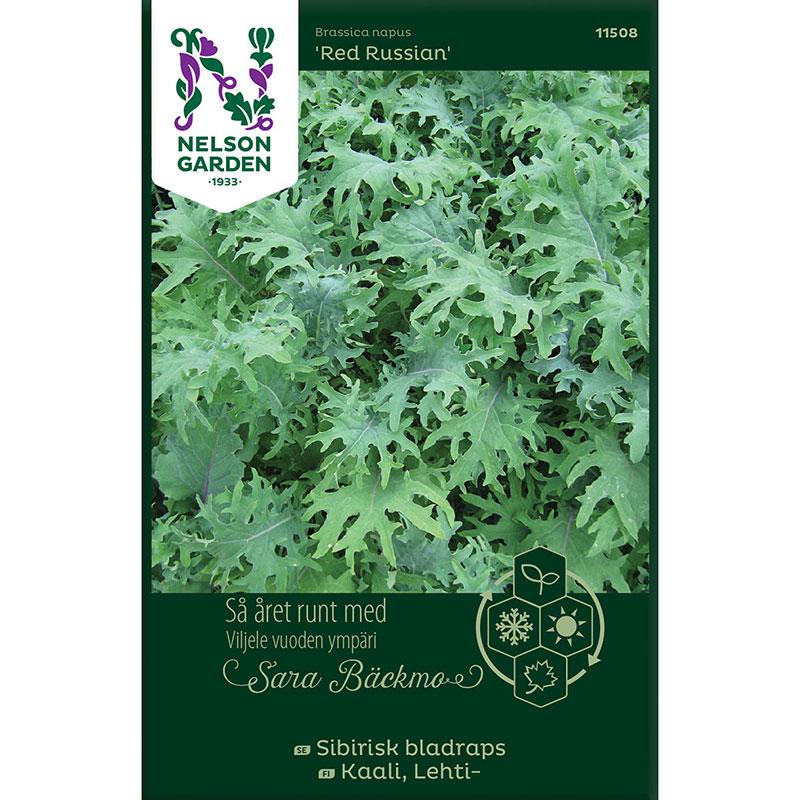 Frö till Sibirisk bladraps, Brassica napus 'Red Russian'