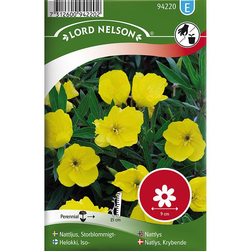 Frö till Storblommigt Nattljus, Oenothera macrocarpa