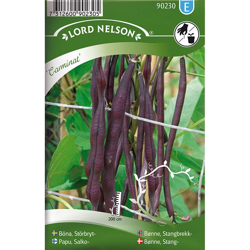 Frö till Störbrytböna, Phaseolus vulgaris 'Carminat'