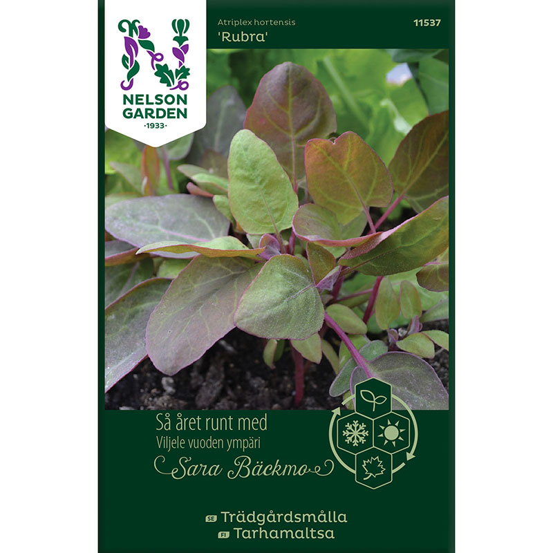 Frö till Trädgårdsmålla, Atriplex hortensis 'Rubra'