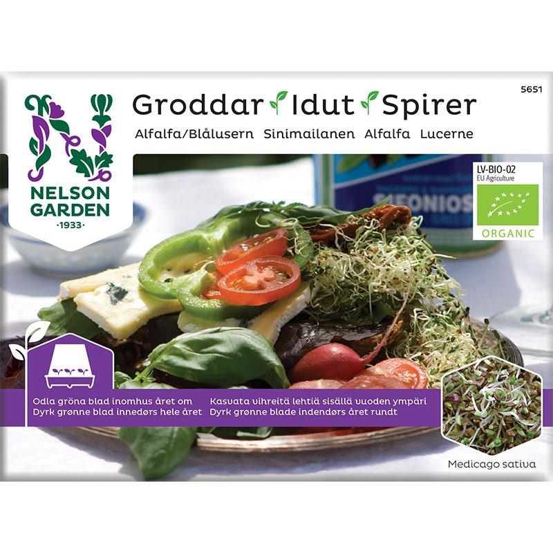 Organiskt frö till groddar - Alfalfa