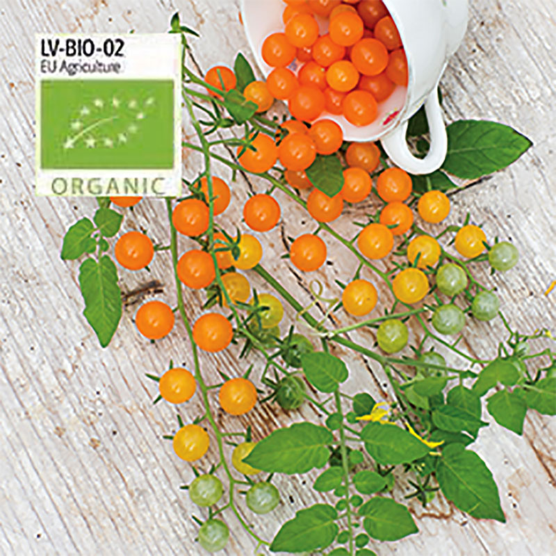 Ekologiskt frö till tomat Golden Currant