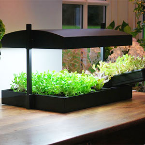 Odlingsstation med bevattnings...-Plats för Inomhusodling av plantor och fröer
