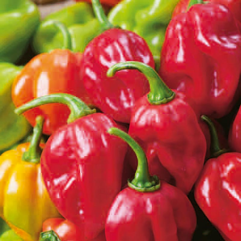 Frö till Chilipeppar - Habanero Red