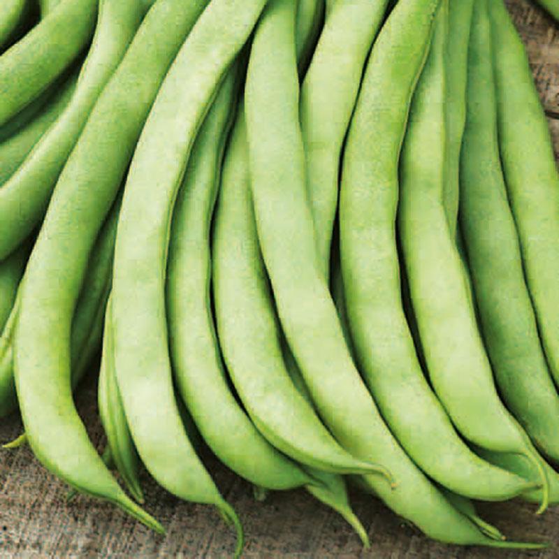 Frö till Böna Organic - Frensh Bean - Argus