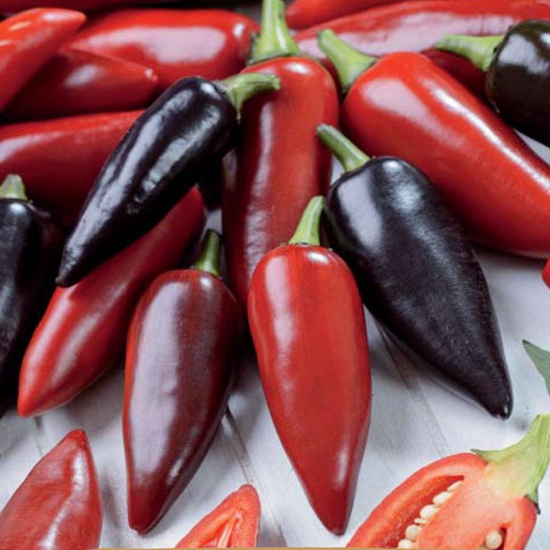 Frön till Chilipeppar Capsicum annuum L. 'Pot Black'