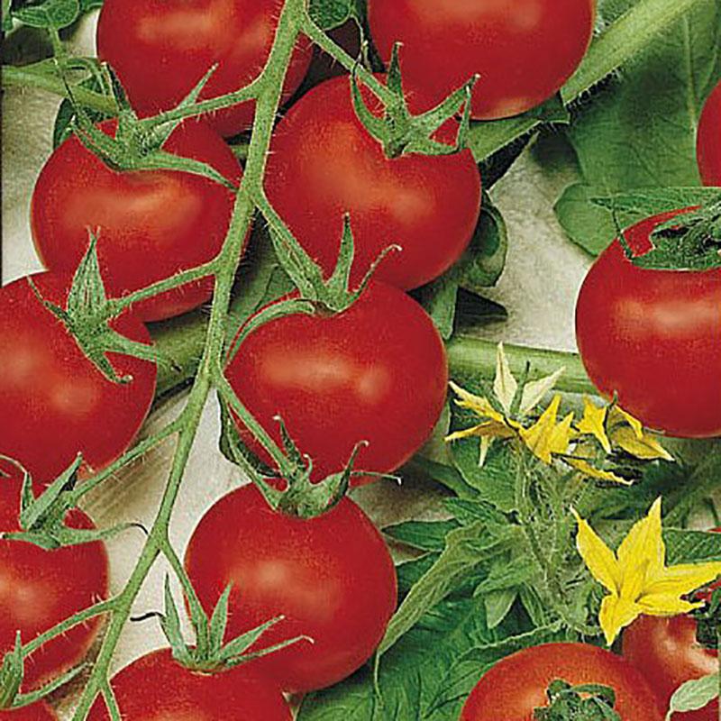 Frö till Tomat 'Cherrola'
