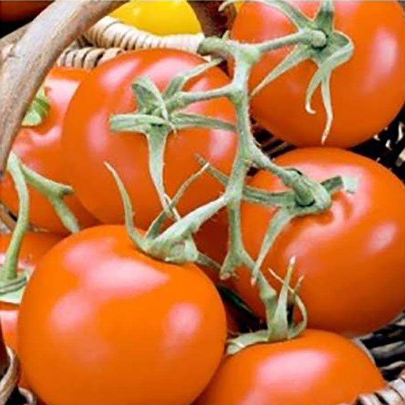 Frö till Tomat, Premio