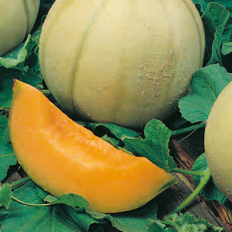 Frö till Melon - Retato Degli Ortolani