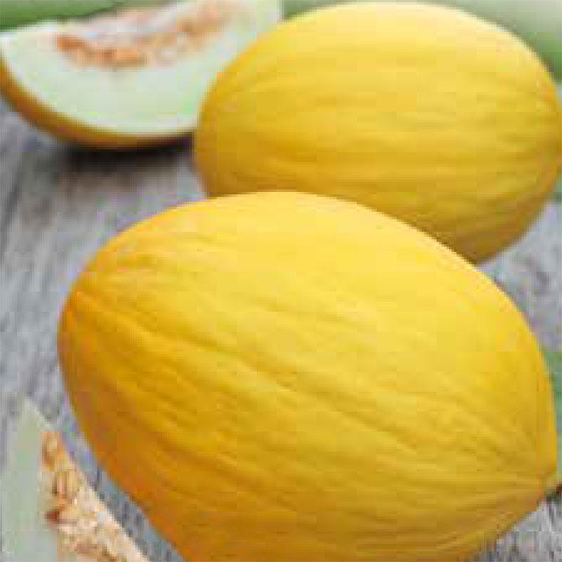 Fröer till melon melon, jaune canari 2