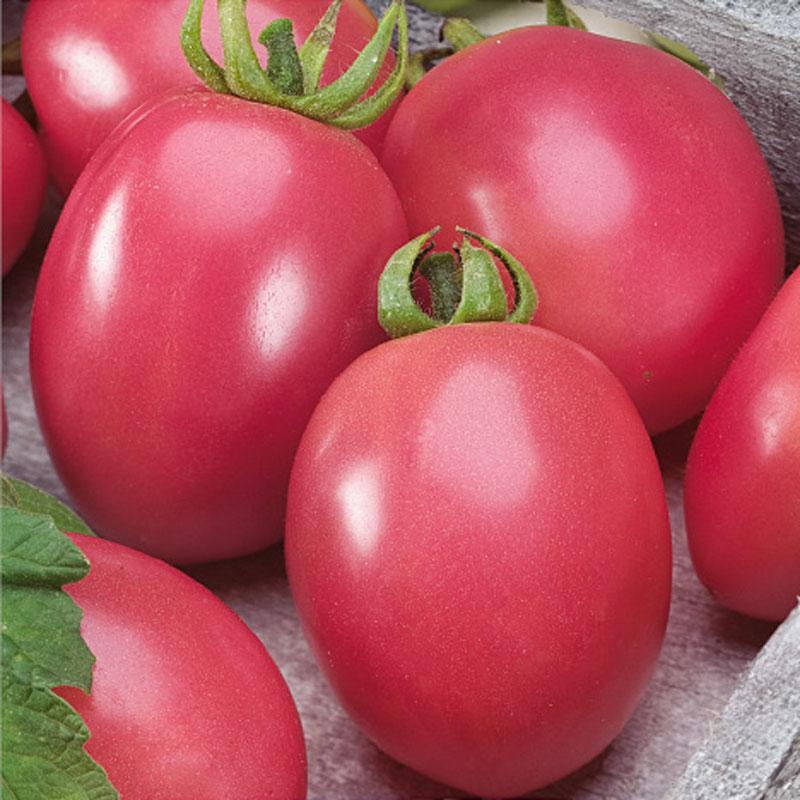 Fröer till Tomat, Solanum lycopersicum L. 'Pink Thai Egg'