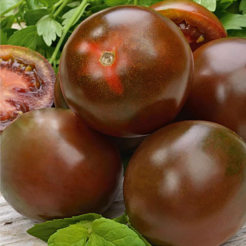 Fröer till Tomat, Solanum lycopersicum L. 'Sacher' F1