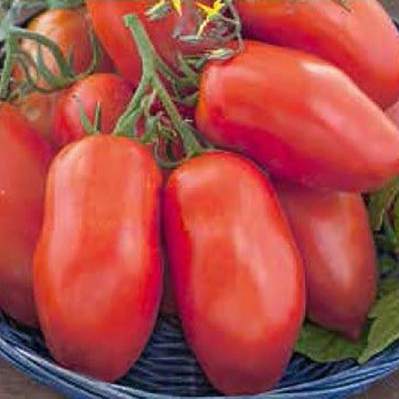 Fröer till tomat tomato, pozzano