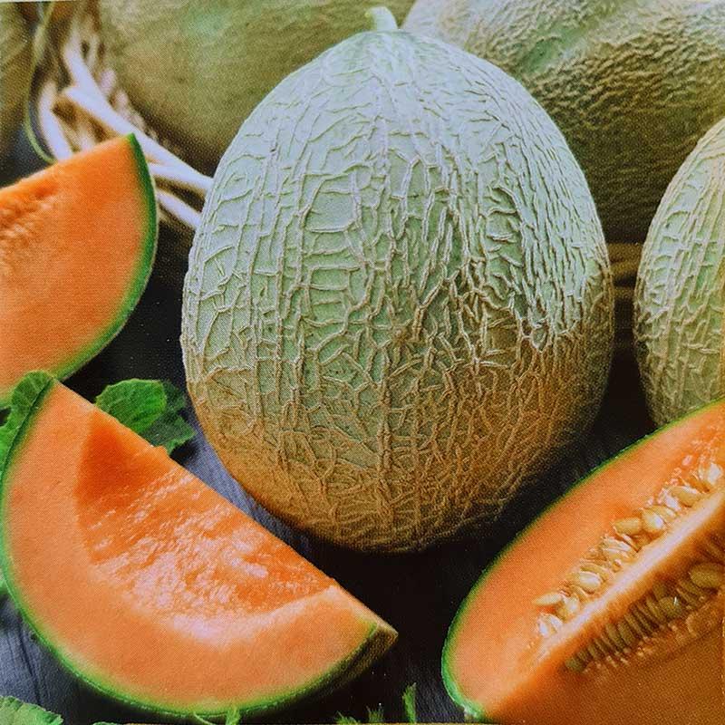 Frö till Melon - Emir