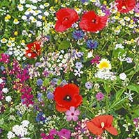 Vildäng blomstermix