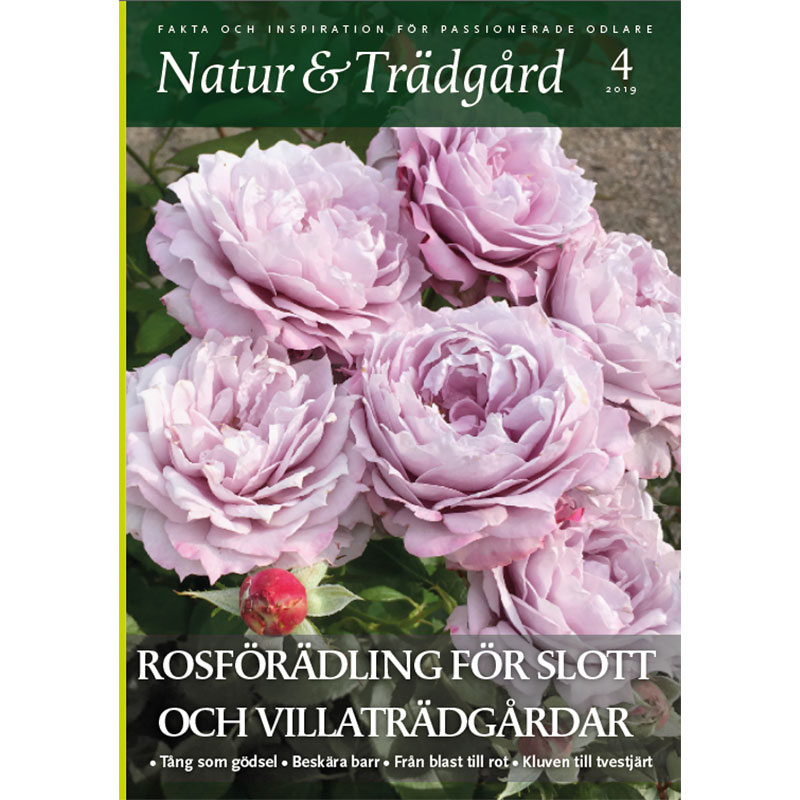 Nummer 4 2019 av tidningen Natur och trädgård