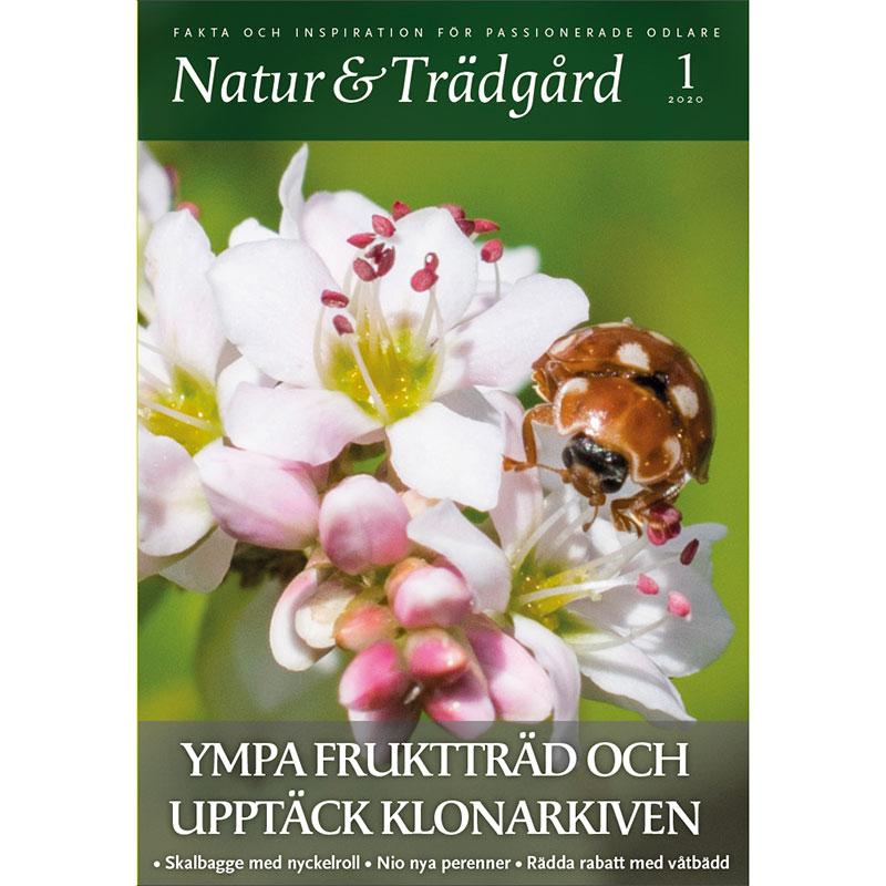 Nummer 1 2020 av tidningen Natur och trädgård