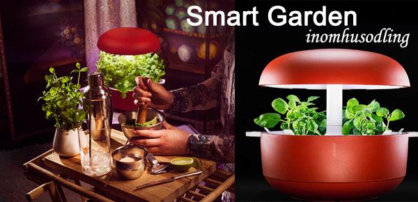 Inomhusodling av ätbara växter