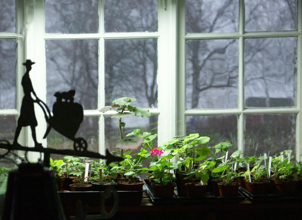 Tips för övervintring av växter