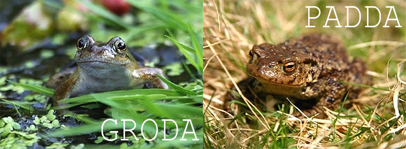 Skillnad på grodor och paddor