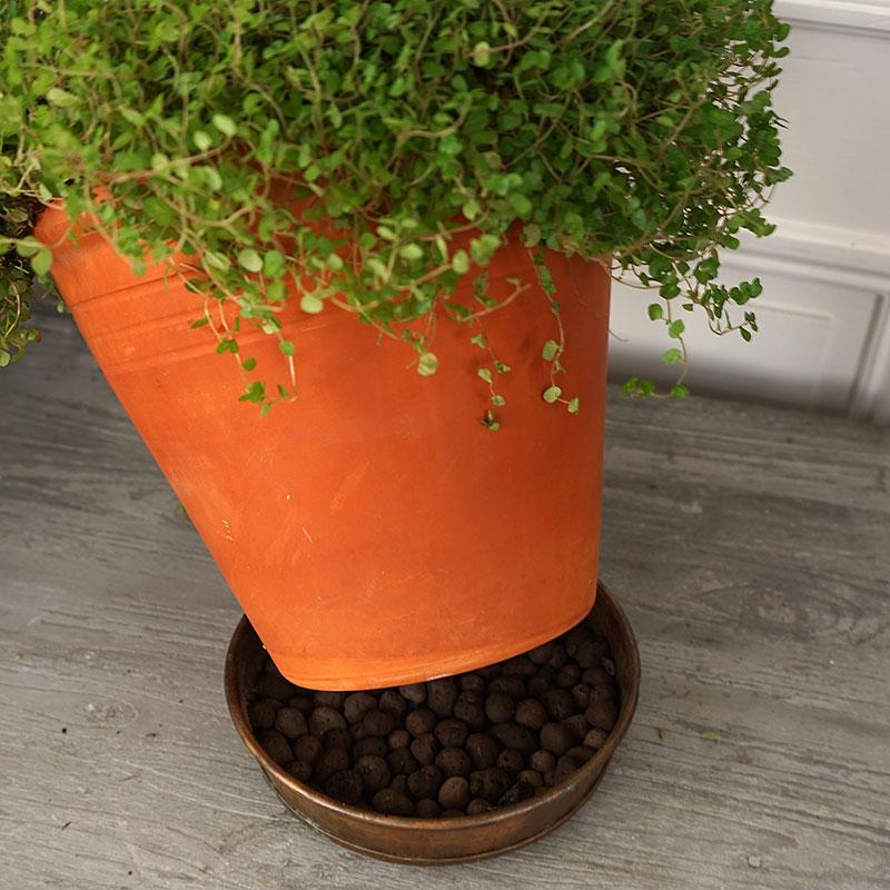 Ställ växten på lecakulor för att höja luftfuktigheten