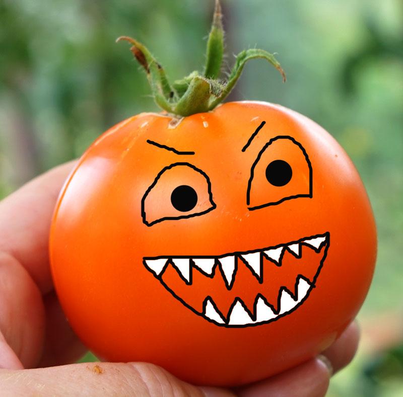 Tomater är köttätande växter