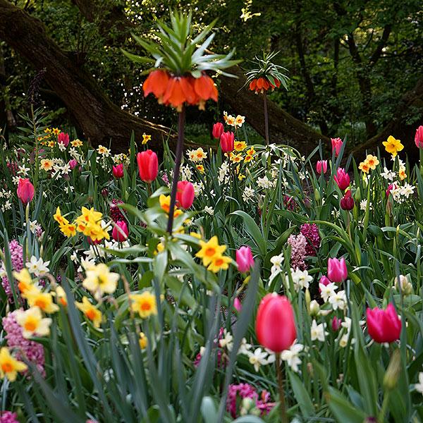 Blomsterlok för höstplantering
