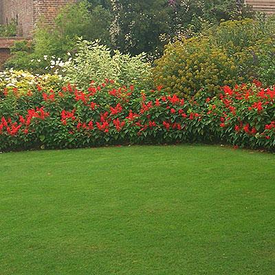 Gräsfrö till olika typer av gräsmatta