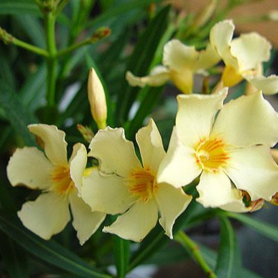 Frö till krukväxter ute och inne