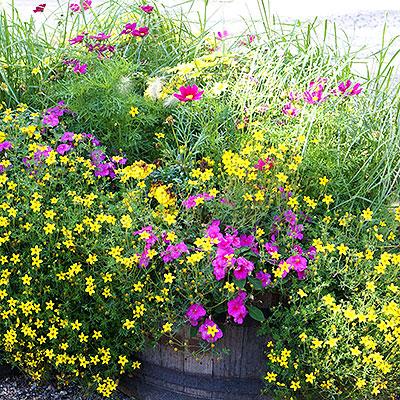 Fröer, lökar, knölar och rötter till blommande och ätbara växter