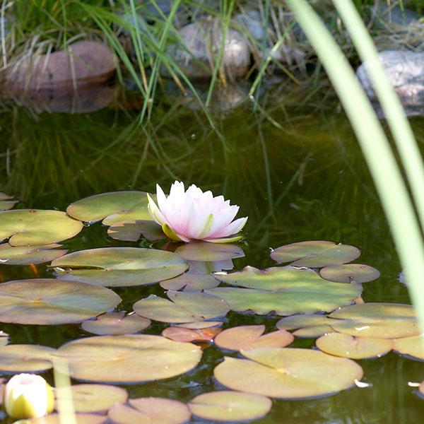 Dammar och vattenspel för trädgården