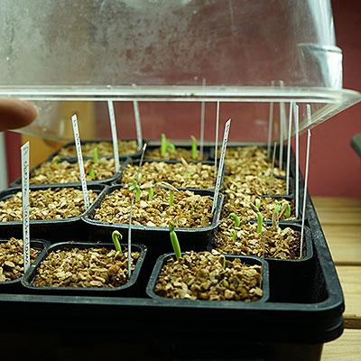 Produkter för odling och förökning av växter