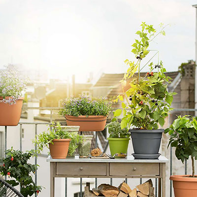 Odling på balkong och i uterum