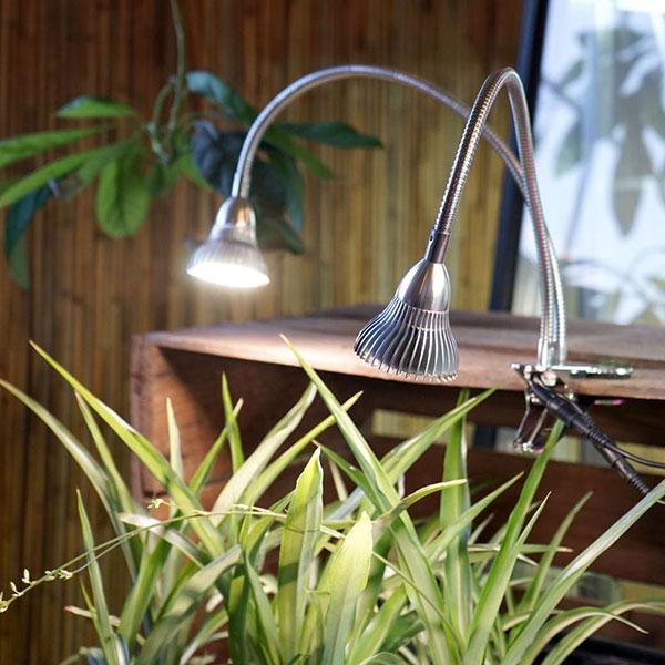 Växtlampor och odlingslampor för växter
