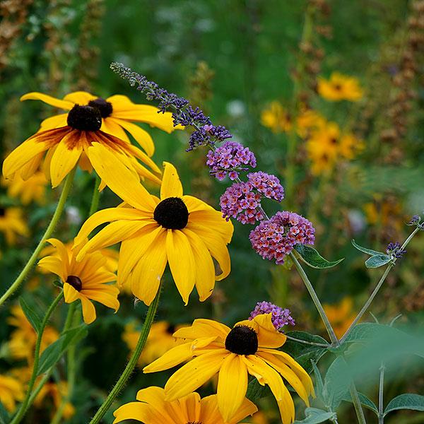 växter till trädgården