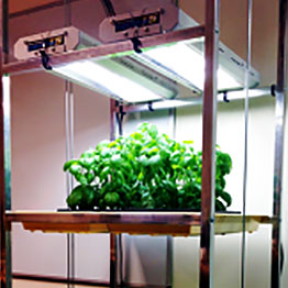 Växtlampor med T5-lysrör för växter