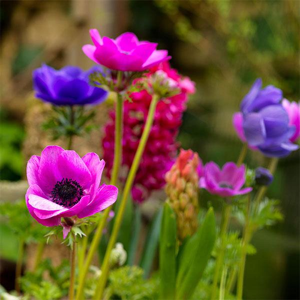 Övriga lökar och knölar till olika växter