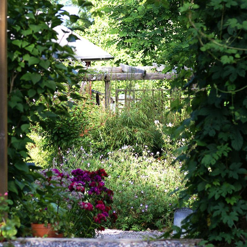 Perenna växter och buskar